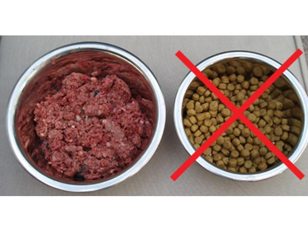 Do You Have the Guts to Feed Real Raw Dog Food with Dr  Judy Jasek