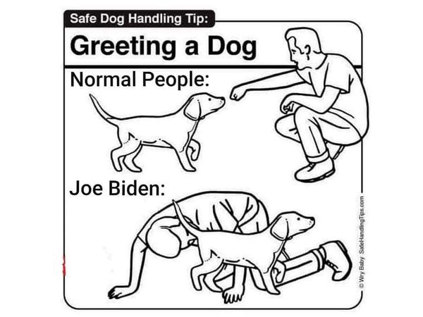 Good Job Team Meme Dog