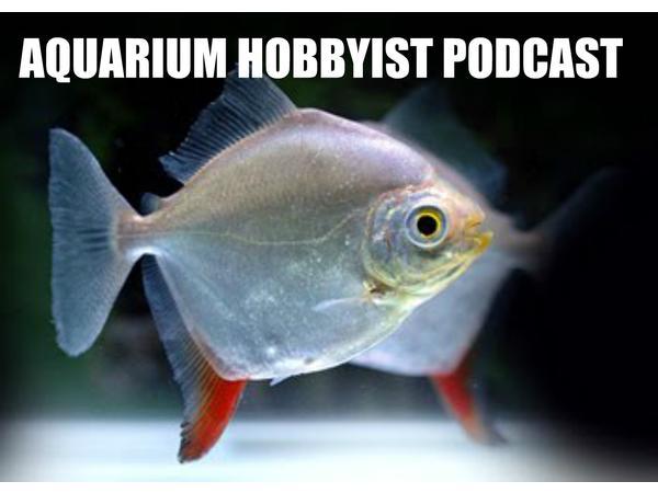 Aquarium Hobbyist Podcast Launch on BTR: Ohio Fish Rescue & More!