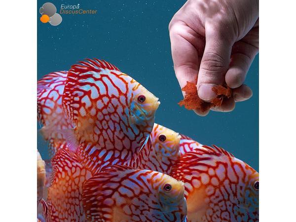 Aquatic School with Aqua Alex: Feeding your Aquarium Fish