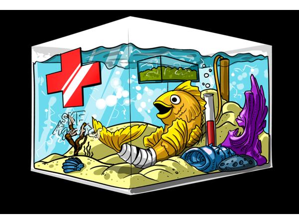 Aquatic School W/ Aqua Alex: Quarantine Aquariums & Why it's Important