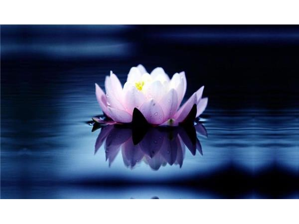 Guided meditation for the new year lotus flower present moment guided meditation for the new year lotus flower present moment peace mightylinksfo