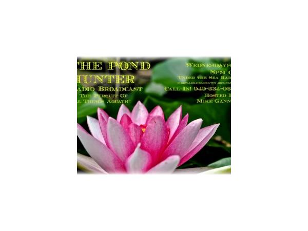 The Pond Hunter- Water Garden and Koi Pond Spring Care Tips