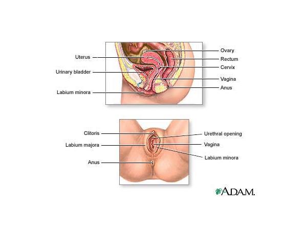 Tips for female ejaculation
