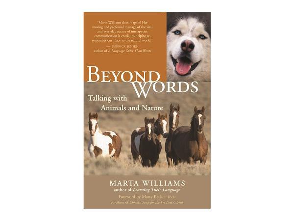 Communicating With Animals Biologist And Animal Communicator Marta