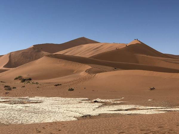 Big Blend Radio: Hot on the Trail of Namibia's Little Five