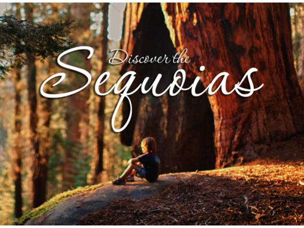 Big Blend Radio: Winter Magic in California's Sequoia Country