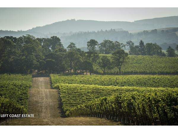 Big Blend Radio: Willamette Valley Wine Country in Oregon