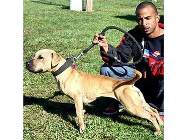 RICO OF PRECIOUS PITS KENNELS ON BULLY TALK WITH ZEB PITS