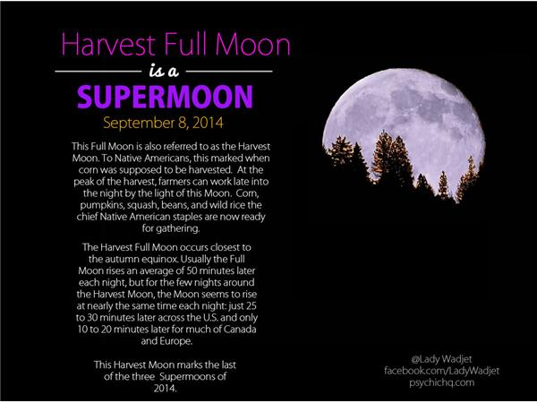 Free Astrology Tarot Readings with Lady Wadjet: SuperMoon in Pisces