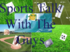 NDB Media Sports Channel