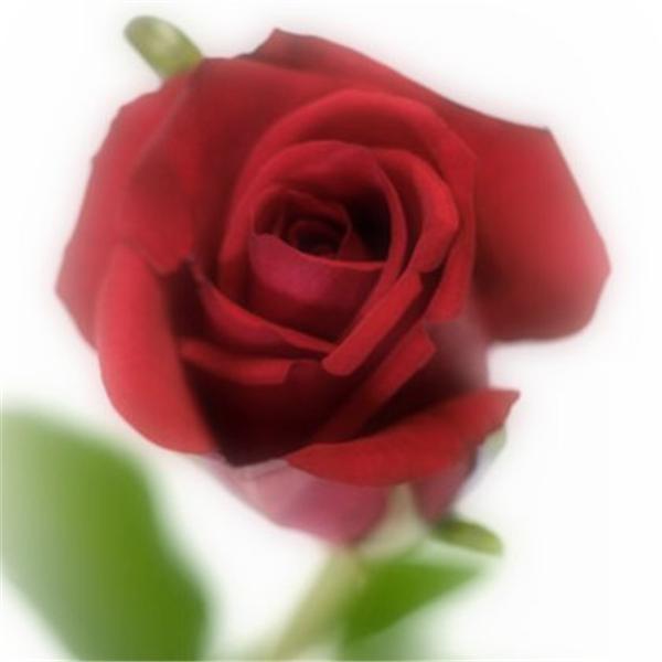 Rose of Sharon Faith Ministries