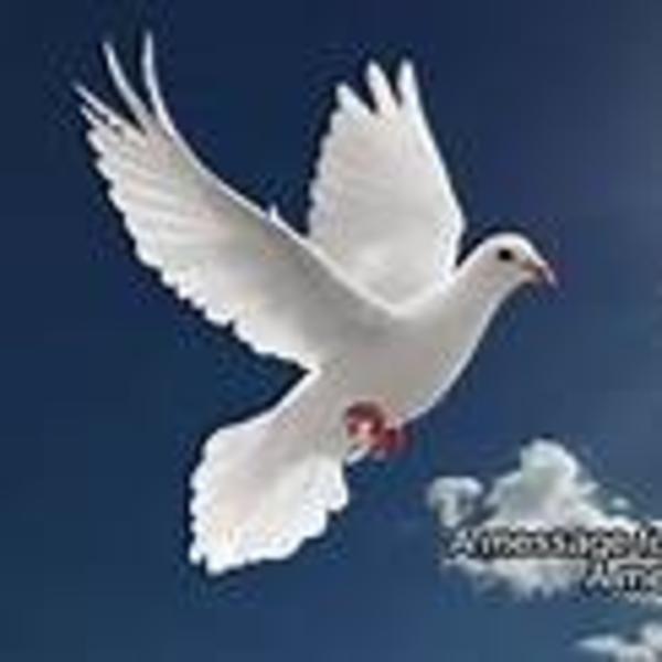 Spirit Of A Dove Association