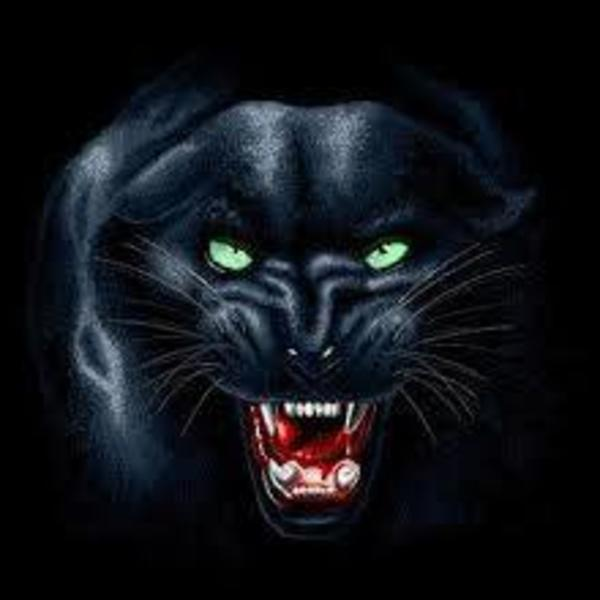 The Panther Party Network