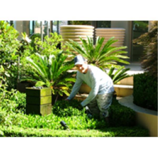 AGH Gardening