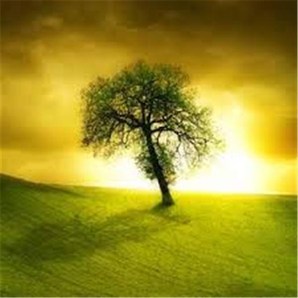 My Soul Healing Journey