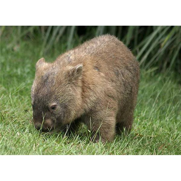 Wombat Underground