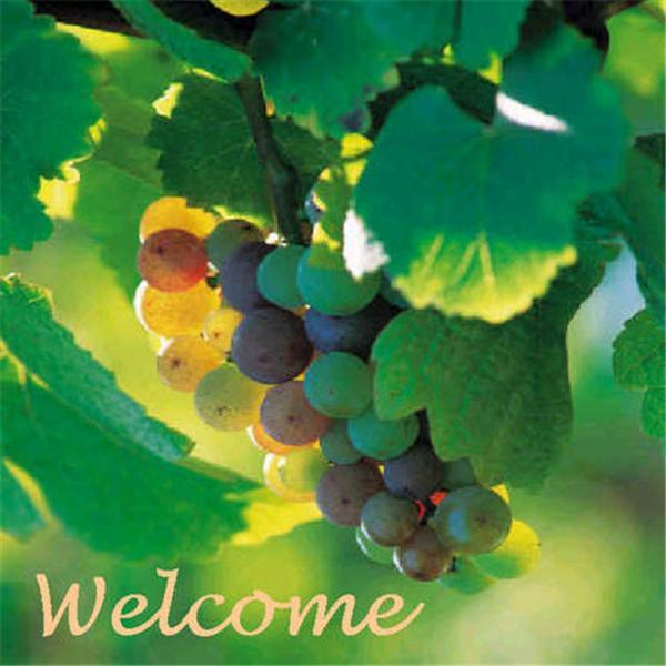 Vineyard Windsor